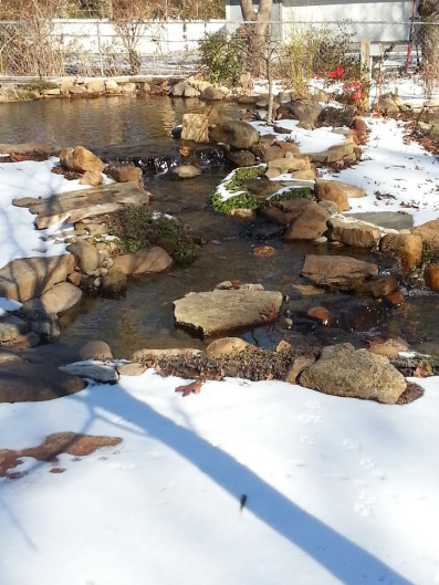 pond-in-winter